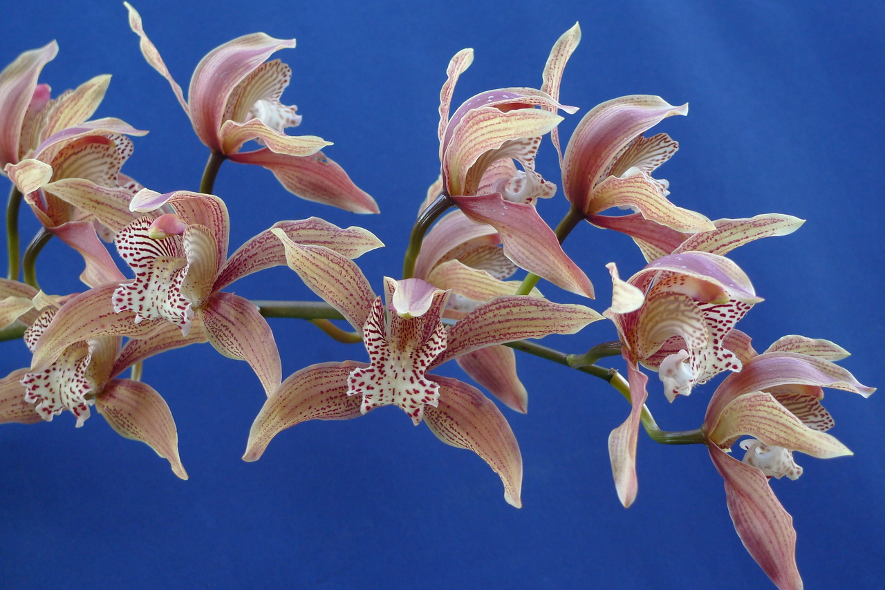 20100618_1448_0160 orchid