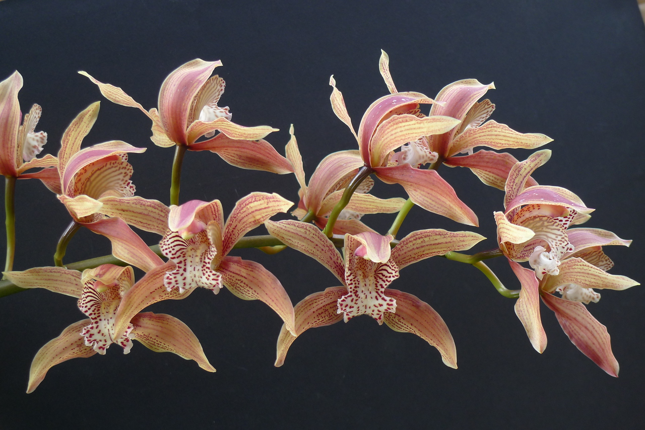20100619_1416_0164 orchid