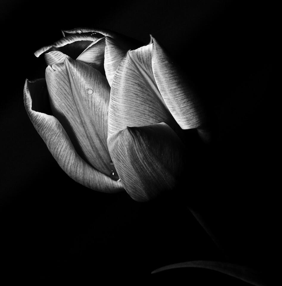 Flowers_2011-09-25_10-15-18__DSC1938_©RichardLaing(2011)