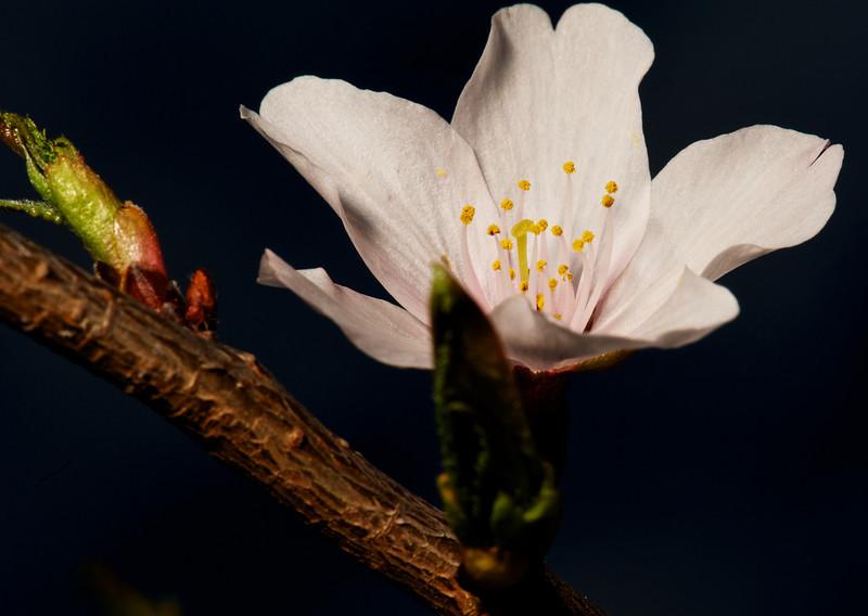 Flowers_2011-09-25_10-19-39__DSC1966_©RichardLaing(2011)
