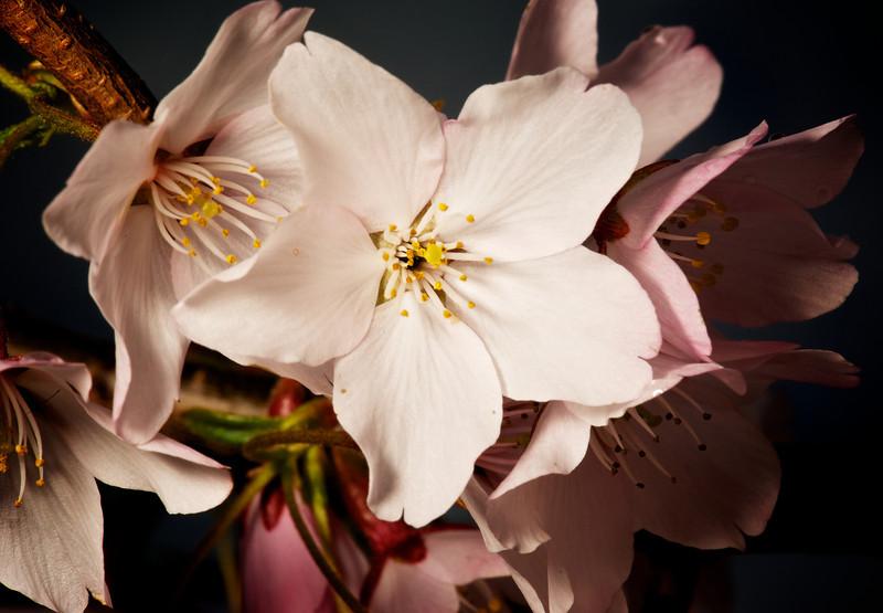 Flowers_2011-09-25_10-19-32__DSC1965_©RichardLaing(2011)