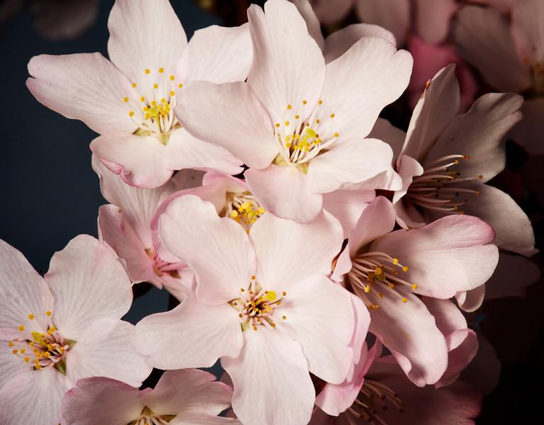Flowers_2011-09-25_10-20-05__DSC1969_©RichardLaing(2011)