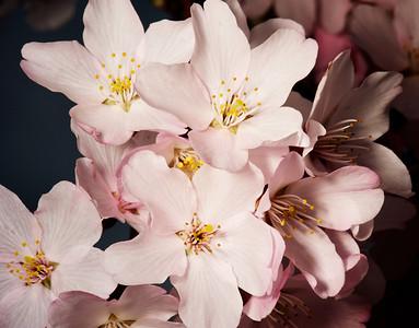 2011-9-25 | Spring Flowers