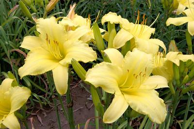 20110703_1531_4194 Xi'an Botanical Gardens