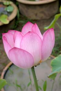 20110703_1602_4207 Xi'an Botanical Gardens