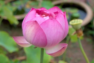 20110703_1601_4206 Xi'an Botanical Gardens