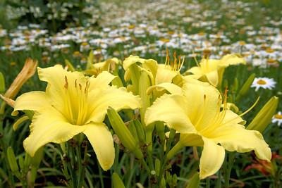 20110703_1533_4197 Xi'an Botanical Gardens