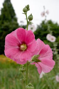 20110703_1548_4205 Xi'an Botanical Gardens