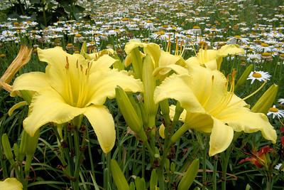 20110703_1531_4195 Xi'an Botanical Gardens