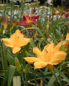 20110703_1541_4201 Xi'an Botanical Gardens