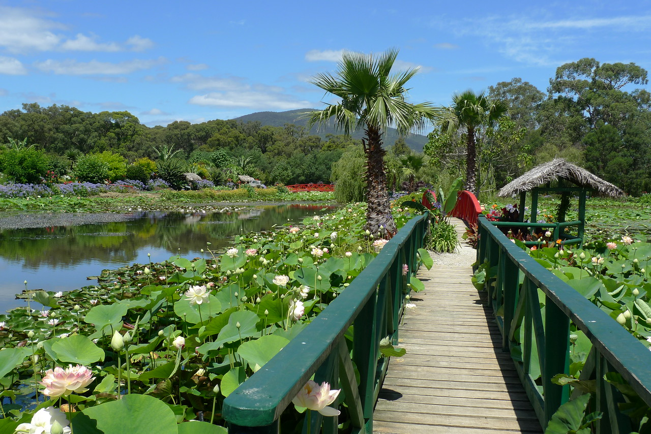 Blue Lotus Watergardens (Yarra Junction, Victoria)