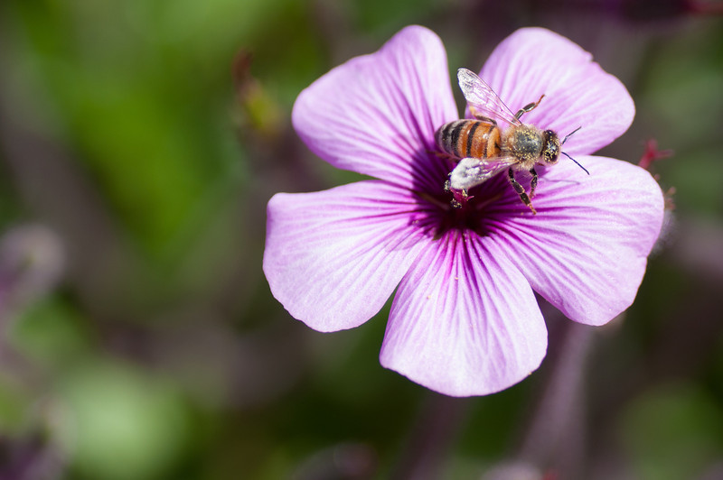 2012-03-27 Carlsbad Flower Fields-8265
