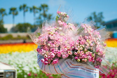 2012-03-27 Carlsbad Flower Fields-8176