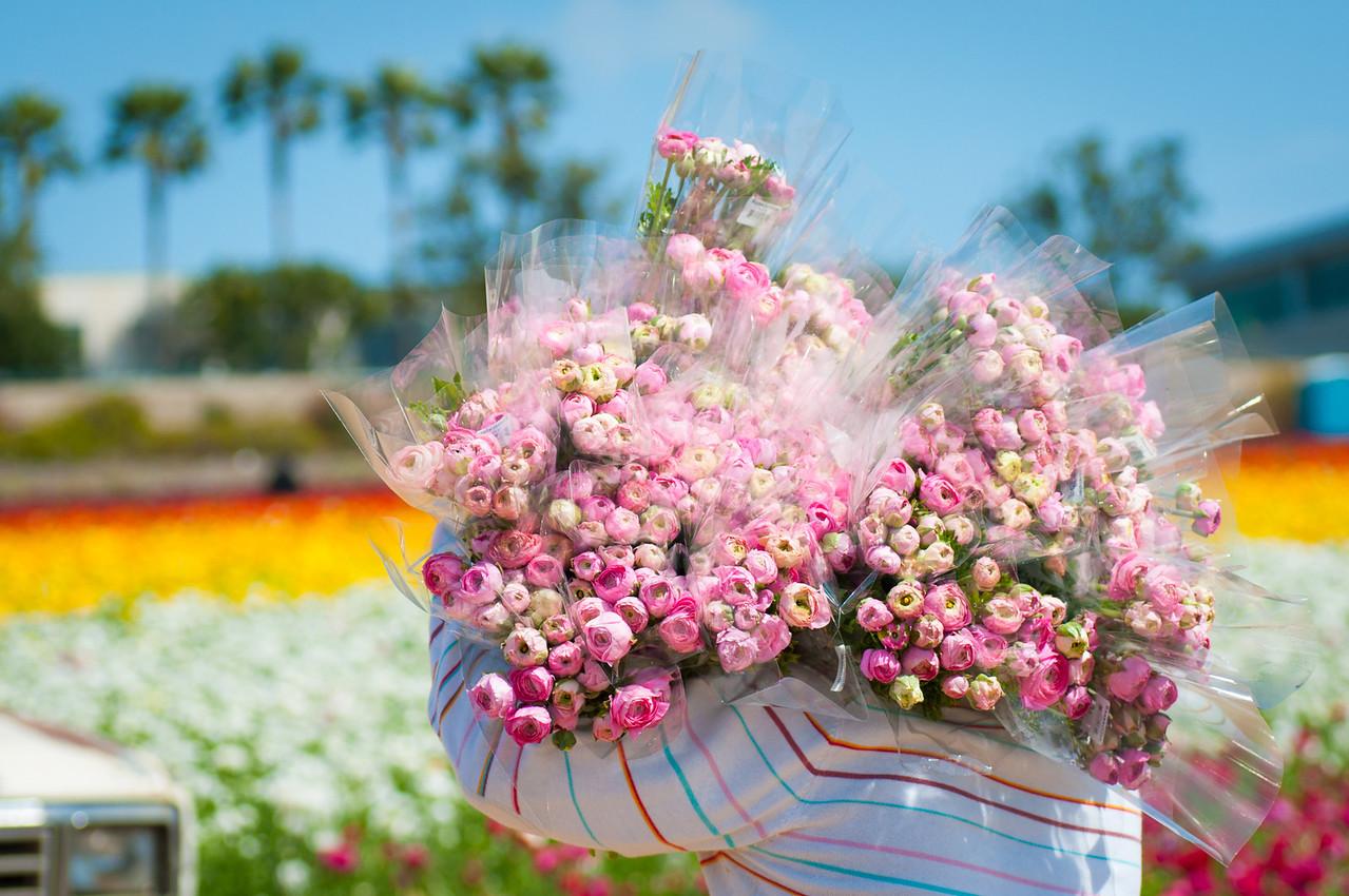 2012-03-27 Carlsbad Flower Fields-8176