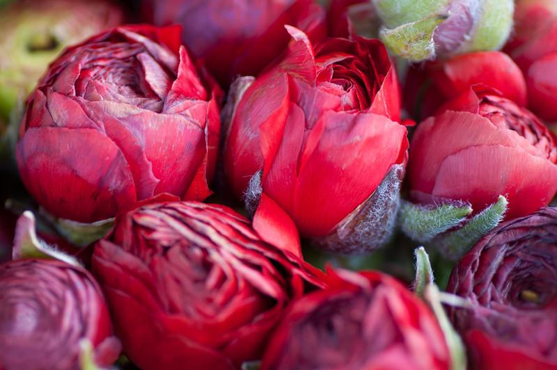 2012-03-27 Carlsbad Flower Fields-8180