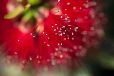 2012-03-27 Carlsbad Flower Fields-8275
