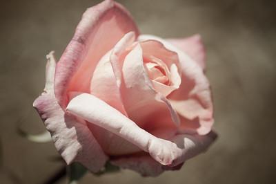 2012-03-27 Carlsbad Flower Fields-8229