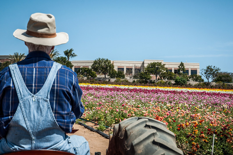 2012-03-27 Carlsbad Flower Fields-8133
