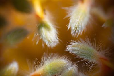 2012-03-27 Carlsbad Flower Fields-8253