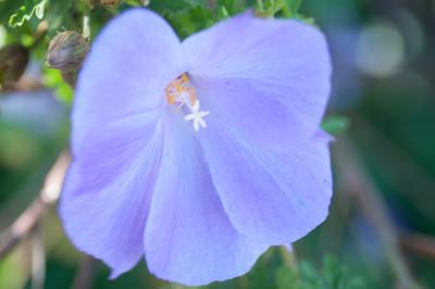2012-03-27 Carlsbad Flower Fields-8245