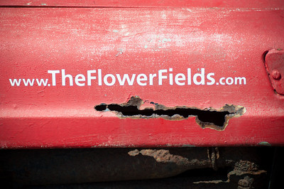 2012-03-27 Carlsbad Flower Fields-8273