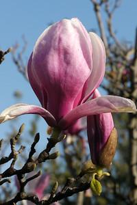 20120813_0935_2408 magnolia