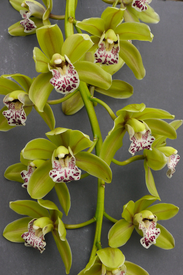 20120608_1339_0091 orchid