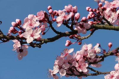 20120816_1626_2612 plum blossom