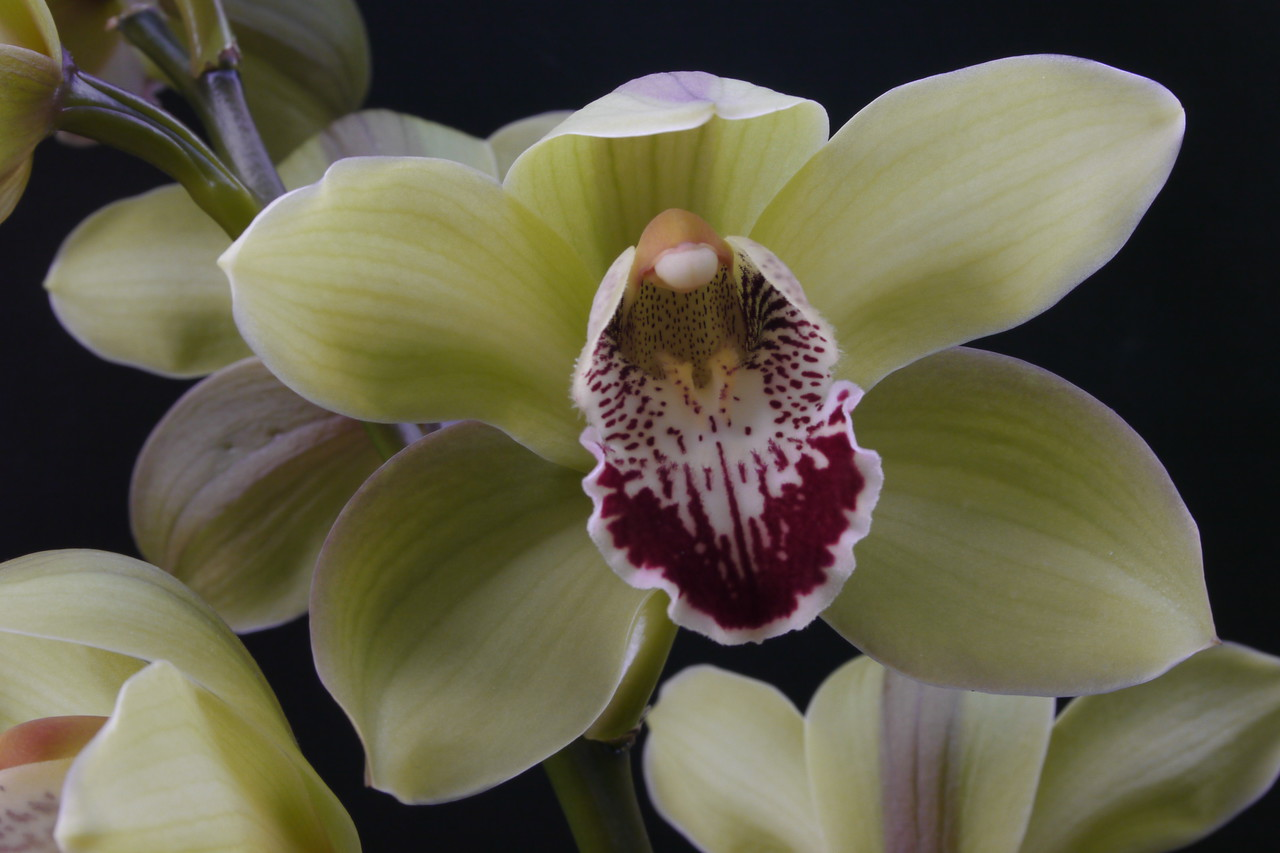 20120708_1359_1295 orchid (Pentax-A 35-70)