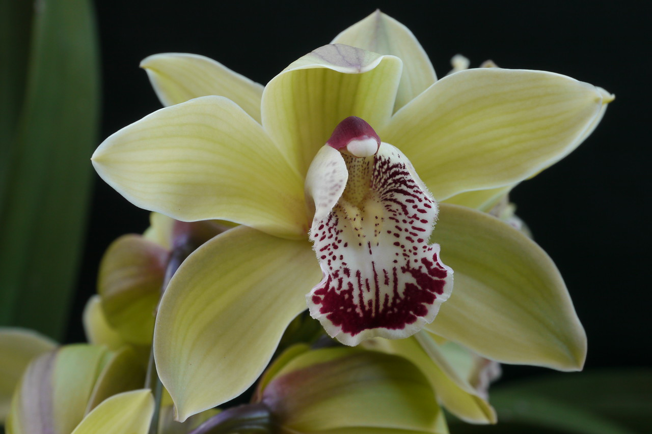 20120804_1444_1907 orchid