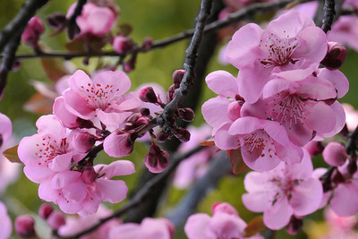 20120816_1604_2587 plum blossom
