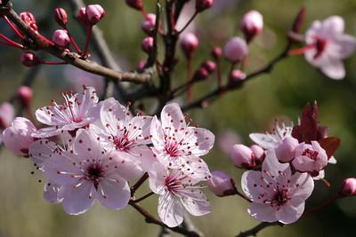 20120813_1023_2454 plum blossom