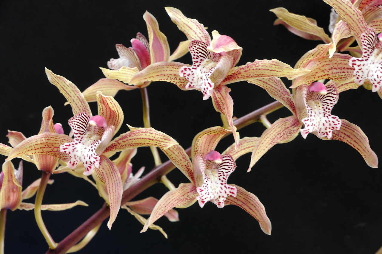 20120719_0859_1616 orchid