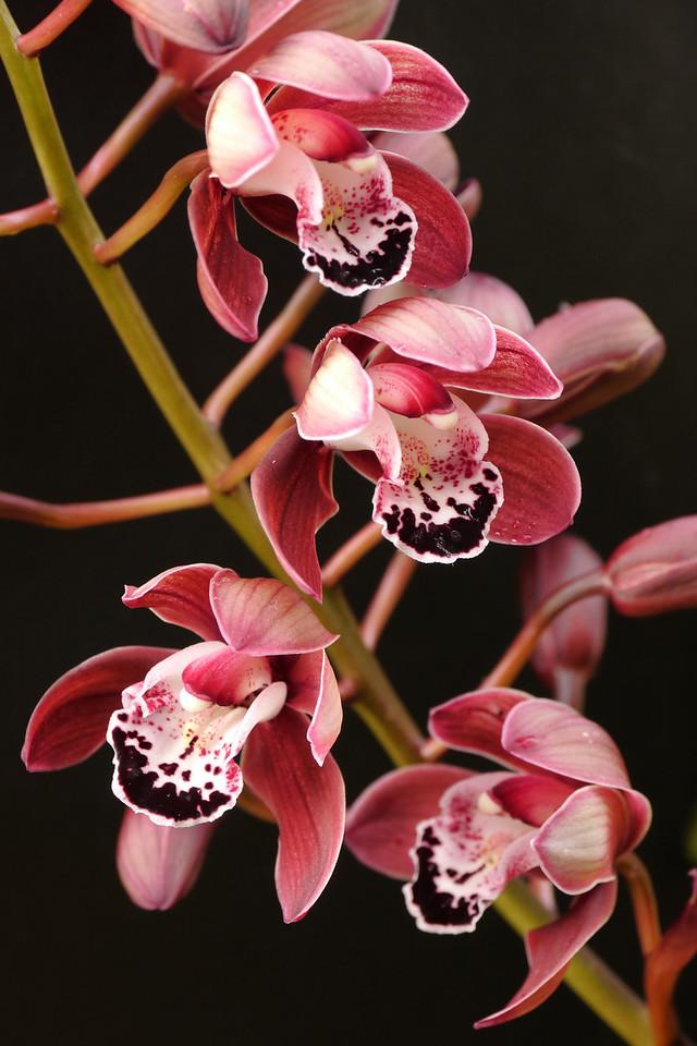 20120709_1028_1421 orchids