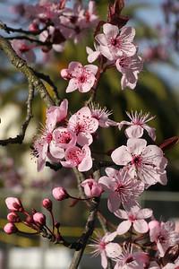 20120816_1624_2609 plum blossom
