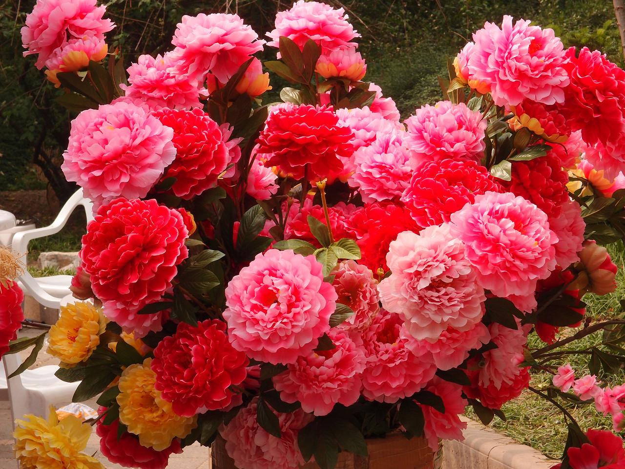 20120513_1426_0403 (plastic) peonies 北京植物园