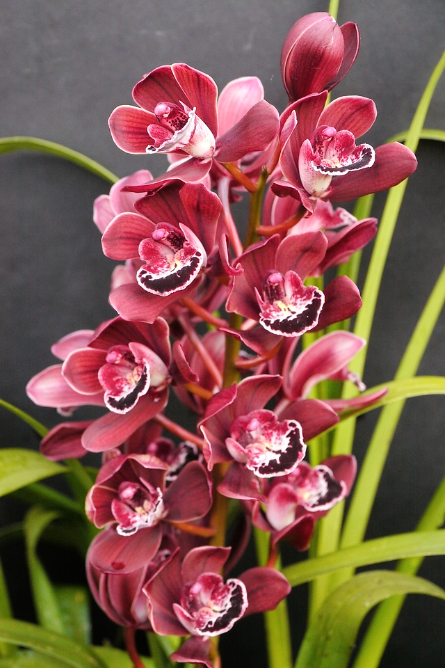 20120728_1249_1757 orchid