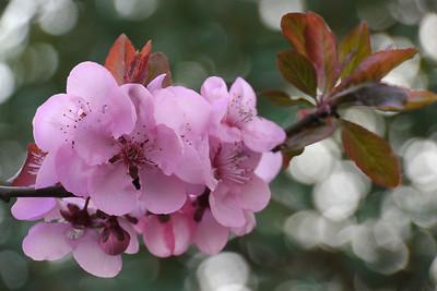 20120816_1551_2563 plum blossom
