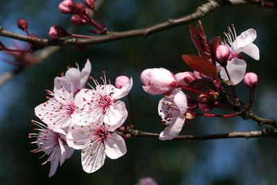 20120813_1034_2476 plum blossom