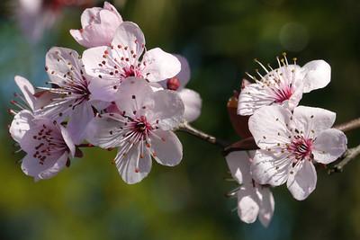 20120813_1030_2469 plum blossom