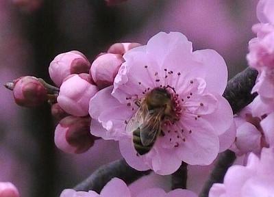 20120805_1558_1953 plum blossum