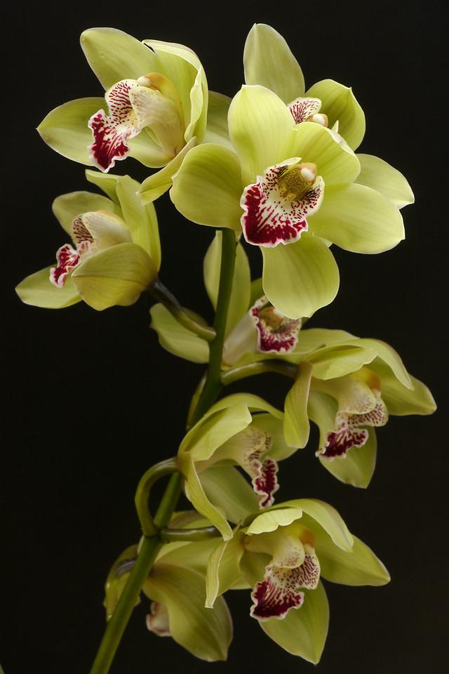 20120709_0943_1412 orchids