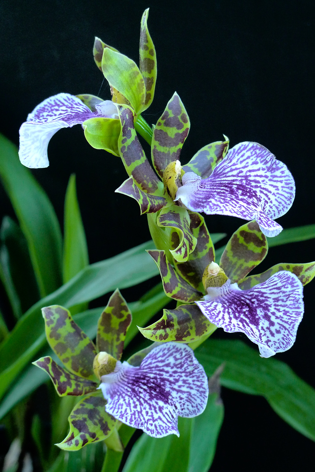 20120524_0822_0904 orchid