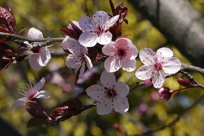 20120813_1042_2484 plum blossom