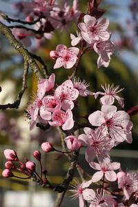 20120816_1624_2611 plum blossom