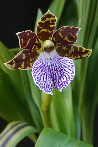 20120804_1425_1903 orchid