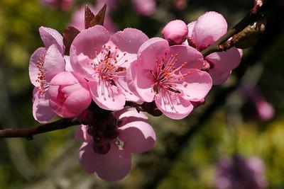 20120813_1003_2431 plum blossom