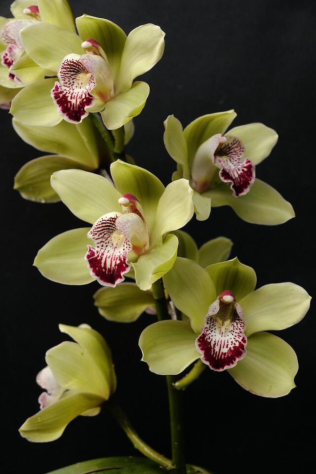 20120730_0842_1823 orchids