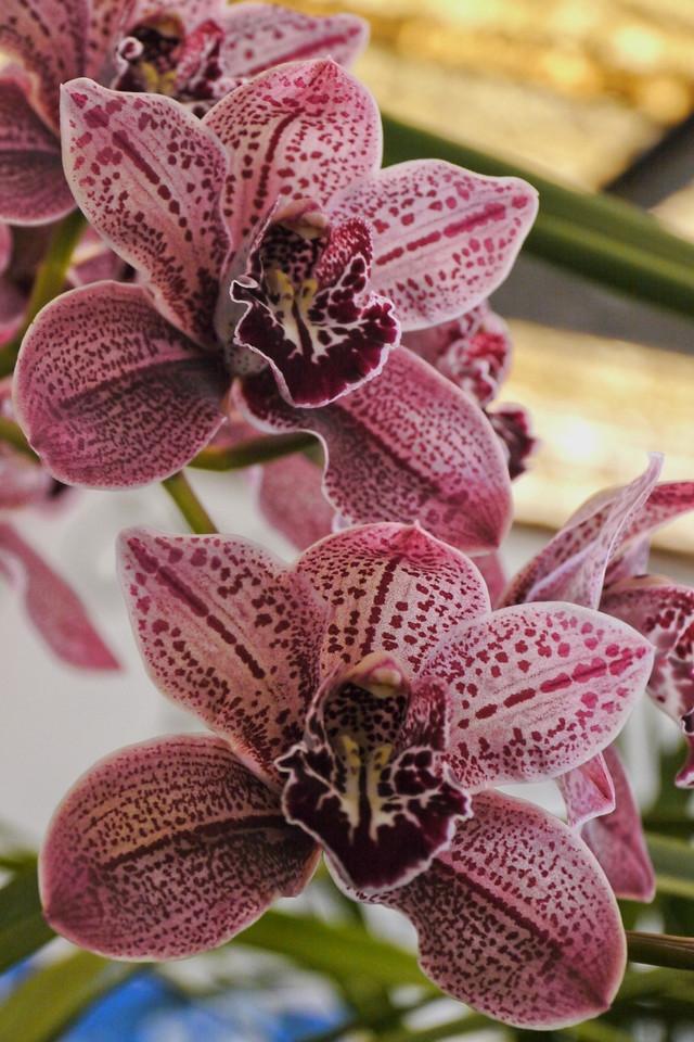 20120915_1212_3501 orchids