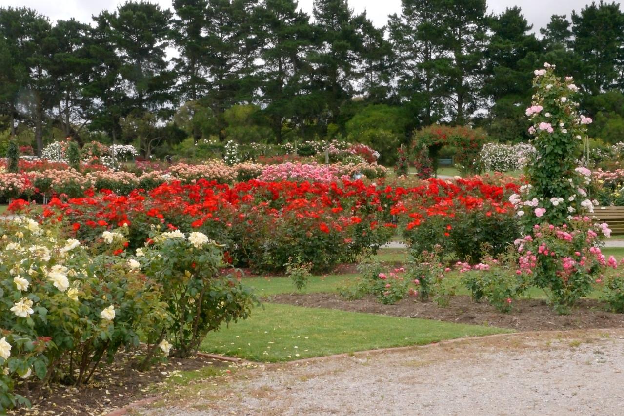 20121117_1031_4818 State Rose Garden, Werribee